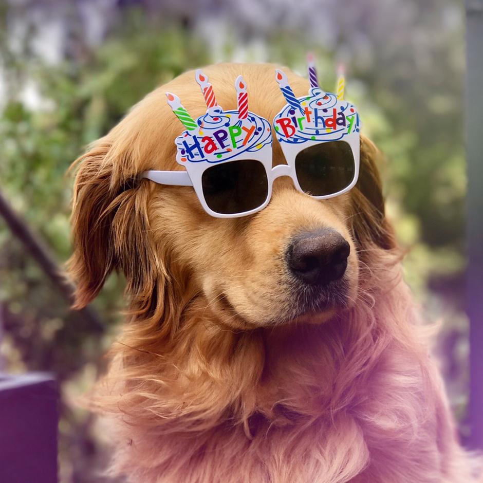 Party Sunglasses (2 pcs)